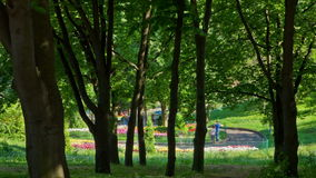 Park. People in summer park. DSLR, Raw quality timelapse stock video footage