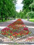 Park in Petrozavodsk Stock Foto's