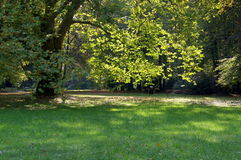 In the park. The photograph shows a large deciduous tree growing in the park. Leaves on a tree and grass are growing around the green. It's a sunny day, the sun Stock Photography