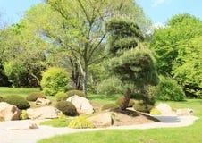 Park with pine tree Royalty Free Stock Photo