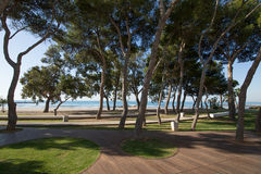 Park with pine trees next to beach in Benicassim. Park with pine trees next to San Vicente or Sant Vicent Turret Beach, also named Torreon, in Benicassim Royalty Free Stock Photography