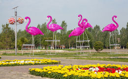 Park Pink Flamingo Royalty Free Stock Photography