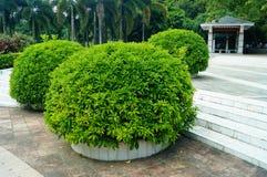 Park plant bonsai Stock Photos