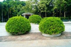 Park plant bonsai Royalty Free Stock Photo