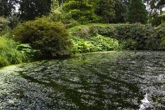 Park pond Stock Photography