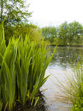 Park Pond Stock Images