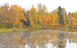 Park and pond at autumn. Royalty Free Stock Images