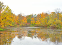 Park and pond at autumn. Stock Image