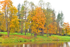 Park and pond at autumn. Park and pond at golden autumn, Russia Royalty Free Stock Image