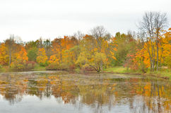 Park and pond at autumn. Park and pond at golden autumn, Russia Stock Photography
