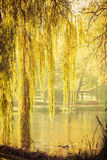 Park with pond and willow trees Stock Photography