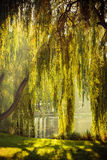 Park with pond and willow trees. Summer or early autumn park with pond or river and weeping willow trees on the shore Royalty Free Stock Photo
