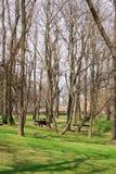 Park in Prag Stockbilder