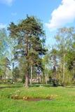 Park in Priozersk. Stock Photo
