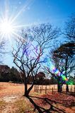 Park przy Poprzednim Hotta domem w Sakura mieście, Chiba, Japonia Fotografia Royalty Free