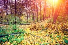 Park przy wschodem słońca w jesieni Zdjęcie Stock