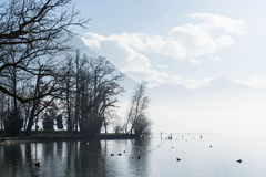 Park on a quite Winter lake on a sunny day. Beautiful park with trees on a quite, foggy , lake with some ducks swimming in it Stock Images