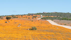 Park ranger on the Roof of Namaqualand viewpoint Stock Photo