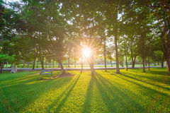 Park and recreation area in the city Stock Photography