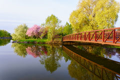 Park with red bridge and pink blossom tree Stock Photography