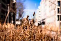 Park reed in vienna stock photography