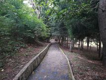 Park Rila, Dupnitsa, Bulgaria. Grass, tree, nature, relax Stock Images