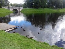 Park with a river and ducks Stock Photography