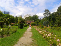 Park Riviera, resort Sochi, Russia. Riviera Park in the city Sochi, blooming roses, green lawns, palm trees and pine trees, a summer walk Royalty Free Stock Photos