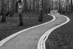 Park road. Curved ground road in park with birches stock photo