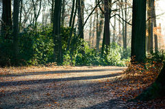 Park road with autumn trees and green plants. Park gravel road with autumn colored trees and green plants on the sides Royalty Free Stock Photos