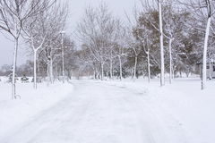 Park road covered in heavy snow Royalty Free Stock Image