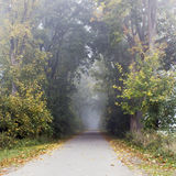 Park road with fog Royalty Free Stock Images