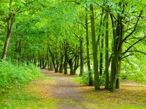 Park road in greenery Stock Images