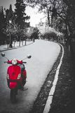 Park road with a red bike royalty free stock photography