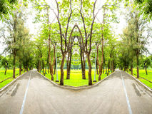 Park road. Walking trails in the park royalty free stock photo