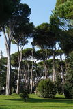 Park in Rome Stock Photography