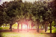 Park with rows of trees Stock Image