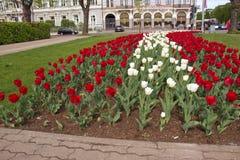 Park Ryski w wio?nie, Latvia, Europa zdjęcie royalty free