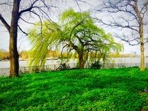 Park rzeką obraz royalty free