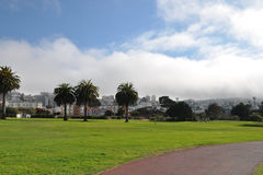 Park in San Francisco Stockbilder