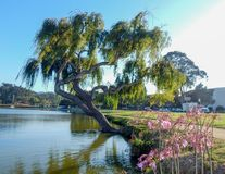 Park in Santa Cruz California stockfotos