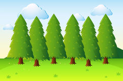 Park scene with pine trees and field Royalty Free Stock Photo
