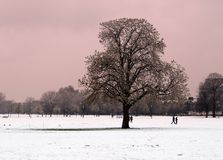 Park Scene in Snow. Trees and figures in the snow on clapham common. Pink tinted sky Stock Photography