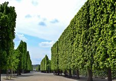 Park Schloss Schönbrunn Obrazy Royalty Free