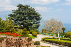 Park and sea. The photo shows the park in Yalta Stock Images