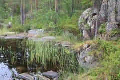 Park See-Wasserpflanze-Farbbaum-Wildnis stockbild