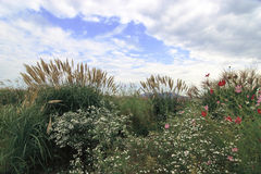 park seoul sky summer στοκ εικόνες με δικαίωμα ελεύθερης χρήσης