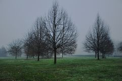 Park serie 2017. Solitary trees -weeping willows Royalty Free Stock Photography