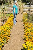 Park Service Volunteer. Waynesboro, VA – October 3rd: A park service volunteer working in the garden exhibit at the Humpback Rocks Farm Museum located at Royalty Free Stock Images