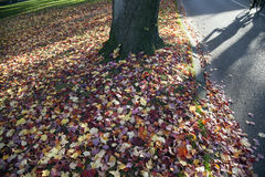 Park and shadow of bike with colorfull maple leaves in the fall Royalty Free Stock Images
